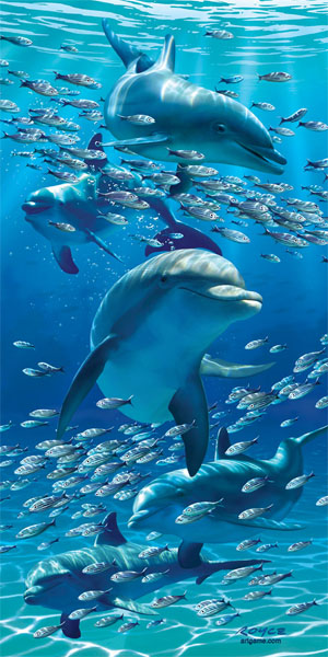 dolphins-poster-web
