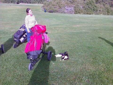 Åda Golf kattungen