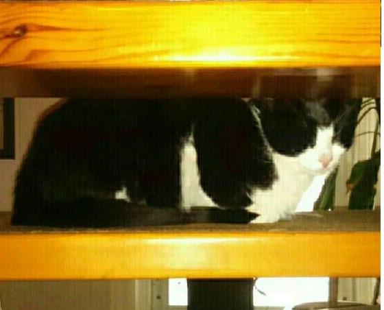 Åda katten 1